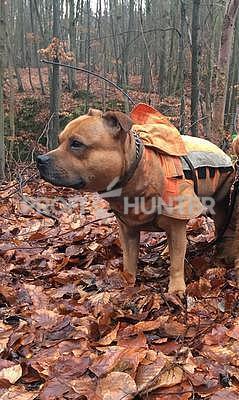 Ochranná vesta pro psa Rudel - staffbull - 2