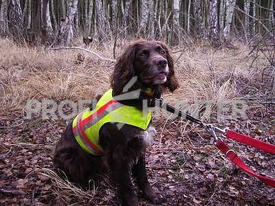 Reflexní vesta pro psa - žlutá - 2