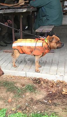 Ochranná vesta pro psa Rudel - staffbull - 3